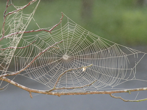 Spider_web_with_dew.jpg