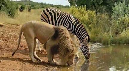 bye_bye_zebra.jpg