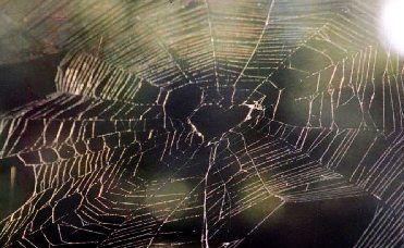 heart-spider-web.jpg