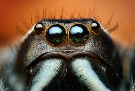 spider_eyes.jpg