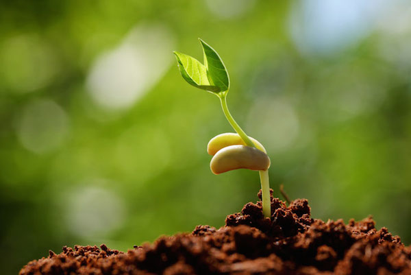 sprouting-seed.jpg