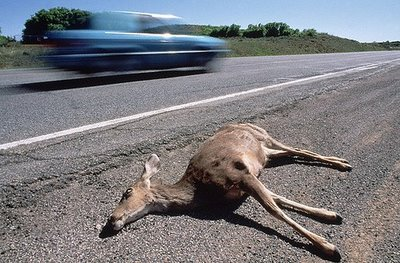 roadkill_deer1 (1).jpg