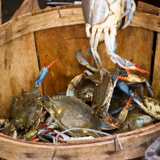 Bucket-of-crabs.jpg