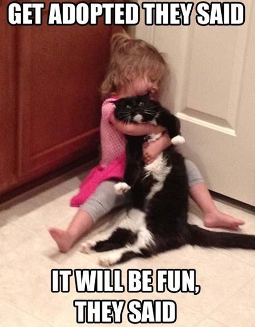 addopted-cat.jpg