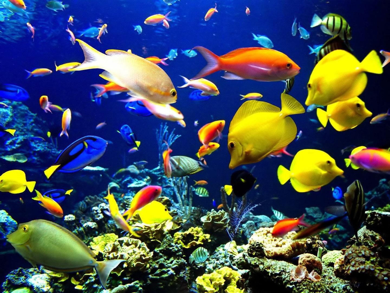 aquarium-fish1.jpg