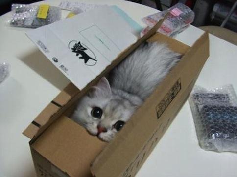 cat-in-a-box.jpg