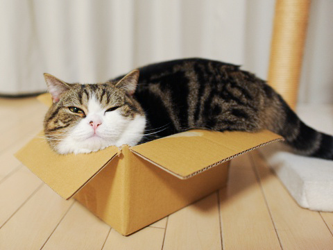 maru-in-a-box1.jpg