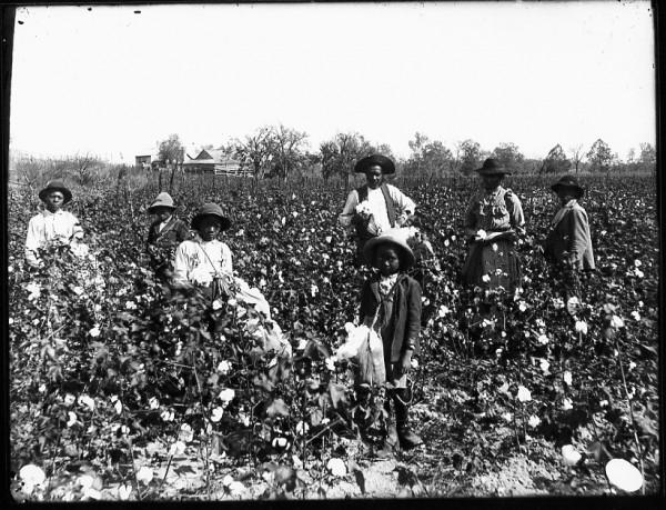 slaves-in-field-600x459.jpg