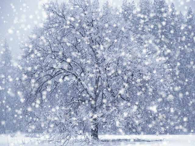 snowfall_1.jpg