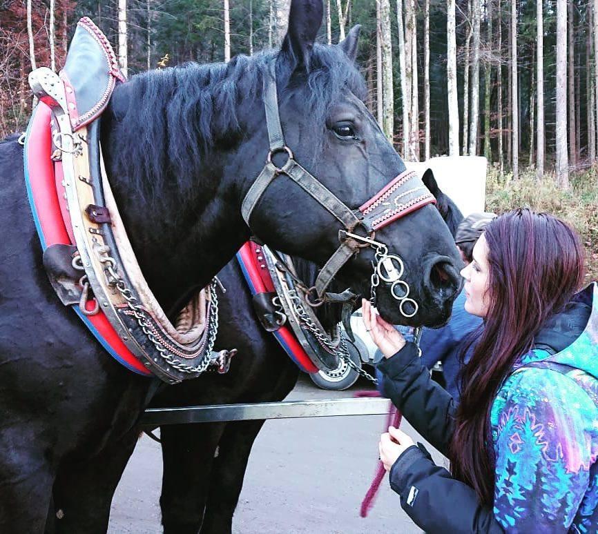 horsey teal.jpg