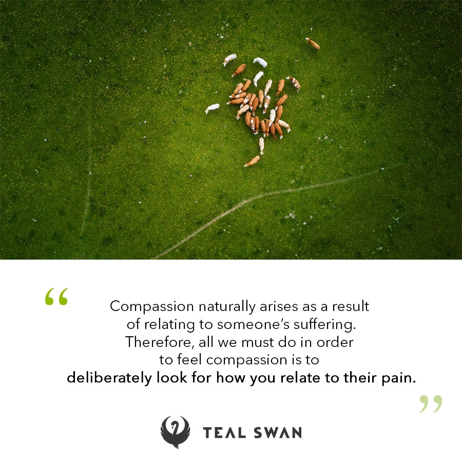 Look For Compassion - Quotes - Teal Swan
