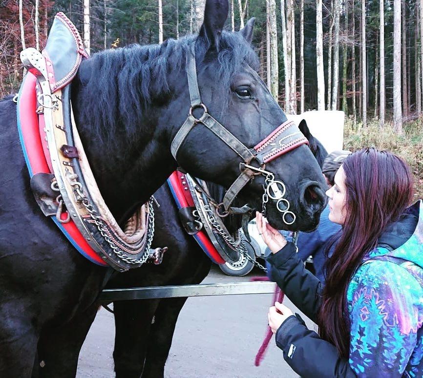 horsesgermany.jpg